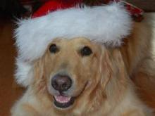 Leno the Christmas Dog
