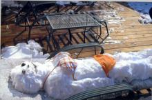 An unusual blanket of white covered the Carolina coast on Feb. 13, 2010.