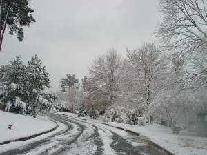 Brookstone Treeline  Backyard Holiday Lights in the snow