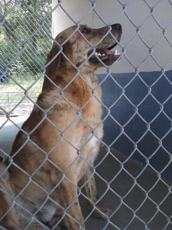 Found stray dog, has been mistreated. Needs home/foster by Friday, May 13th. Please call 910-286-9298, leave message and I will get back to you as soon as possible.