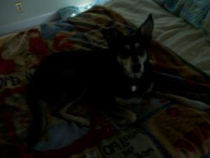 We will love you always Sparky. 3/17/1996-03/06/2012. Love, Mommy and Daddy Poppy)Hanna and Sammie too