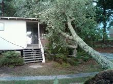 Tree Falls on Cabin