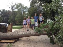 Tree Fall -- With Kids!