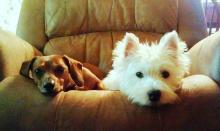 Pet Photos   July 23 - 29, 2012