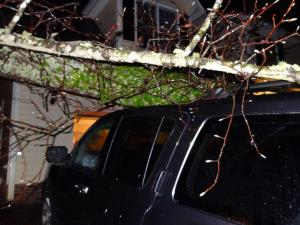 This tree fell on our vehicle about an hour ago.  The truck actually protected the car from being damaged.