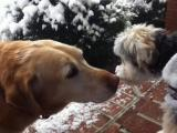 Bayley and Zeva nose to nose in the snow!!!!