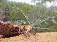 A line of strong thunderstorms raced through central and eastern North Carolina Friday, briefly prompting tornado warnings in four counties and leaving minor damage in its wake.