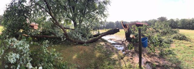 Storm Damage in Sanford