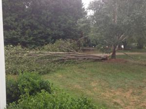 High winds bring down Bradford pear today.  Thanks Hurricane Arthur, just what I wanted to work on for my birthday!  -Brett Hall