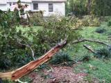 Southern Wake County Tree (Wind) Damage