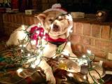 Cleo's Christmas picture 2014