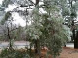 Ice storm 2016