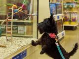 Doggie observing bird in pet store