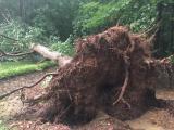 Tree down Springdale Woods