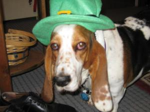 Photo by: Lori Wicker and Lee Carter. Dixie Lou on St. Patrick's Day!!