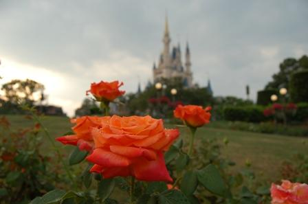 Photo by: Yves Velazco. Photo was taken from the Disneyworld Rose Garden with the Disney Castle as the background.