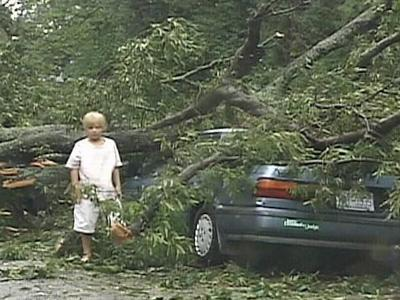 Utilities protect power lines from potential storm damage