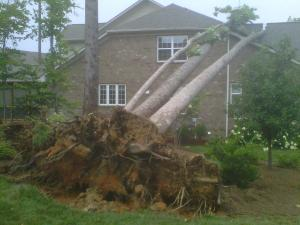 An uprooted tree fell on a house on Cole Valley Drive in Cary Sunday.