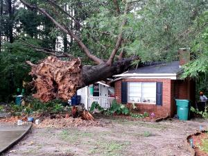 Thunderstorms Tuesday afternoon uprooted this tree on Spring Lane and Sanford, laying it to rest on a home. The extent of the damage has not been determined. Photo by Adam Owens