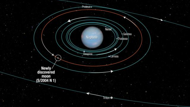The newly discovered moon orbits Neptune every 23 days inside the orbit of Proteus (Credit: NASA, ESA, STScI)