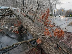 A tree blocking Cole Mill Road in Durham on Friday, March 7, 2014.