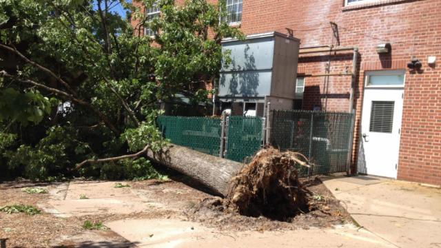 Tree down in Durham