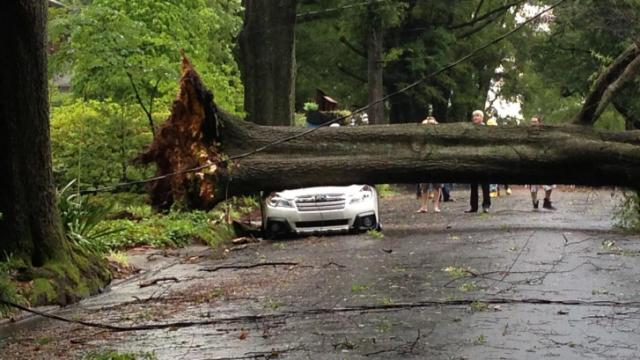 A car is crushed by a massive fallen tree on Dollar Avenue near Englewood Avenue in Durham. (Arielle Clay/WRAL)