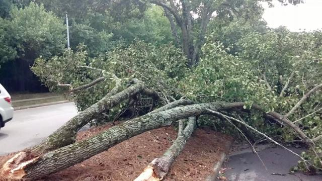 A tree fell in the Crossroads area of Cary on July 3, 2014.