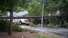 Downed tree in Raleigh