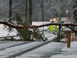 Tree falls on power lines in Raleigh