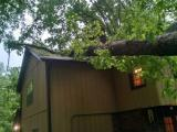 Tree on Raleigh house