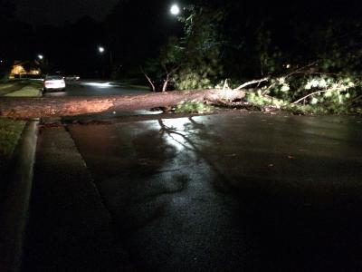 Downed tree on Hensley Drive in Raleigh