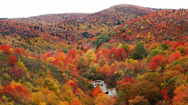 Fall in the NC mountains