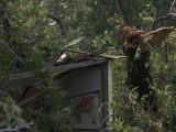 Falling trees fatal in Pitt County