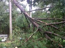 Falling trees miss Angier home