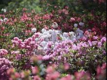 Colorful WRAL Gardens Screensaver Photos