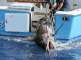 Florida teen reels in giant swordfish