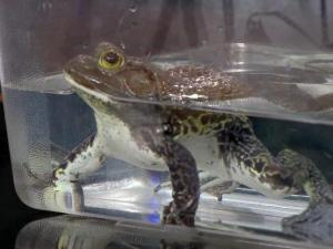 Museum of Natural Sciences holds 'Darwin Day' on Feb. 13