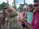 Zoo that rescued animals from Katrina looking for new home