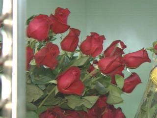 Roses Price Increase