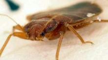 IMAGE: Bedbugs found in Forsyth County DSS building