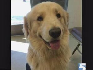 A Cumberland County family lost their beloved Golden Retriever Bobo, but now he lives with a new family. The dog escaped from the home and ended up in the Cumberland County Animal Shelter where he was legally adopted by another family.