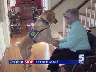 Dogs make great family pets. For people with disabilities, though, dogs and other service animals can give independence as well as companionship.