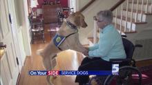 IMAGES: Service dogs provide companionship, independence; 'Today's' Wrangler moving to next step of training
