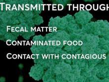 Norovirus facts