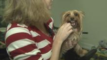 IMAGE: Don't try to run: Tips to fend off dog attacks