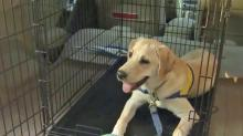 IMAGE: Crates may not be enough to keep dogs safe on road trips