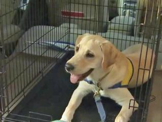 Crates may not be enough to keep dogs safe on road trips