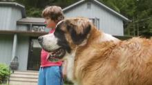IMAGES: Pets can get Lyme disease too! How to protect your dog from ticks