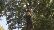 IMAGES: Check your trees: It's cheaper to remove your tree than to have Mother Nature do it for you